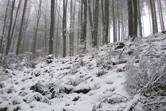 Lesní kopec datování